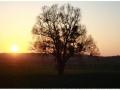 Baum nahe Bessingen in Dämmerung