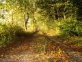 Herbstlicher Weg am Ith